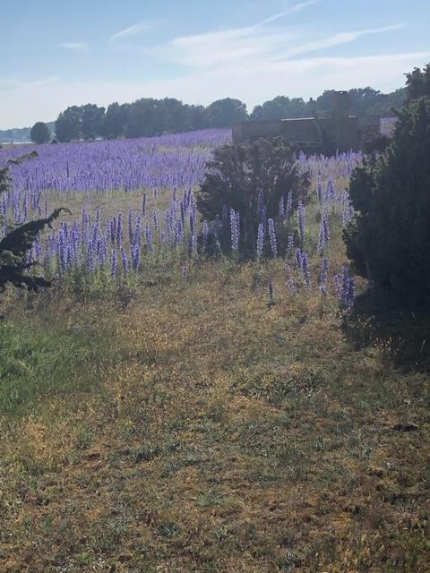 Botanikvecka i blommande försommar , info och anmälningar, klicka här
